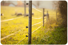 Fence in a Pasture